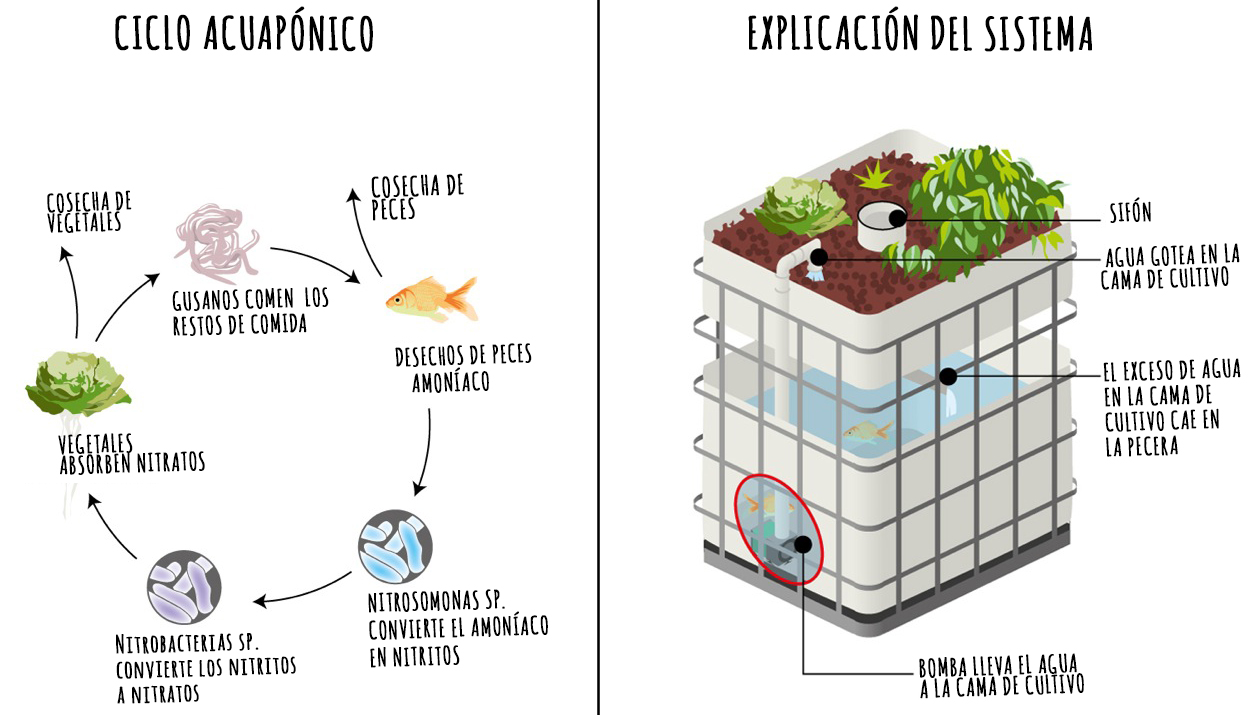 aquaponic-system-drawing